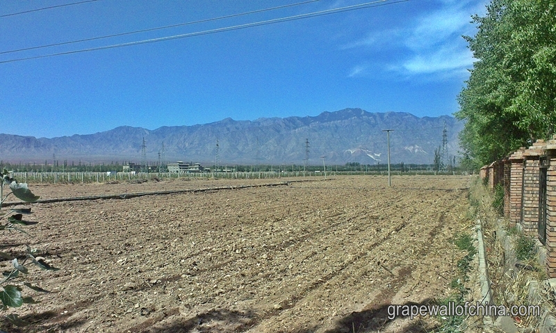 ningxia winery tour may 2018 pushang 3