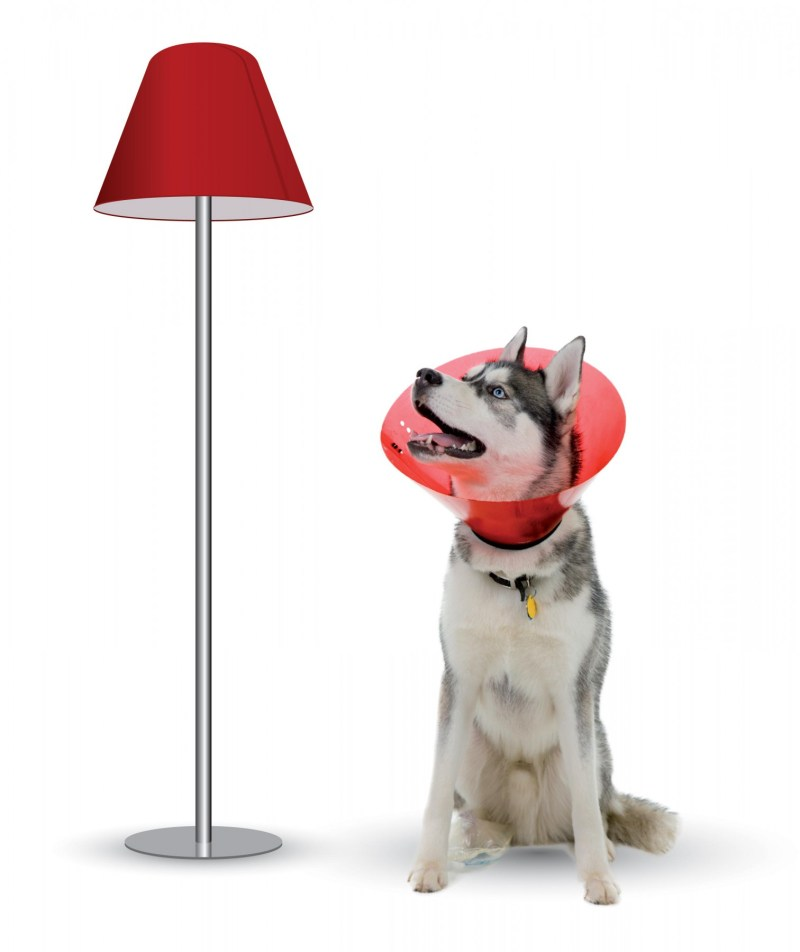 chien-lampe-empathie design