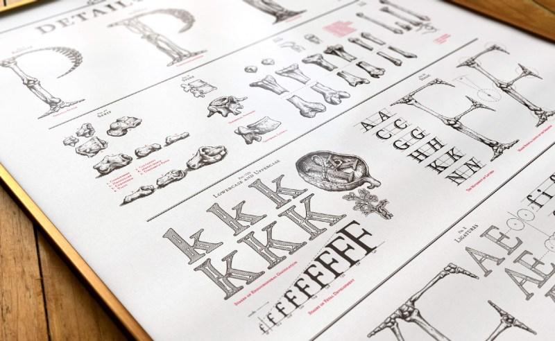 typo-anatomie