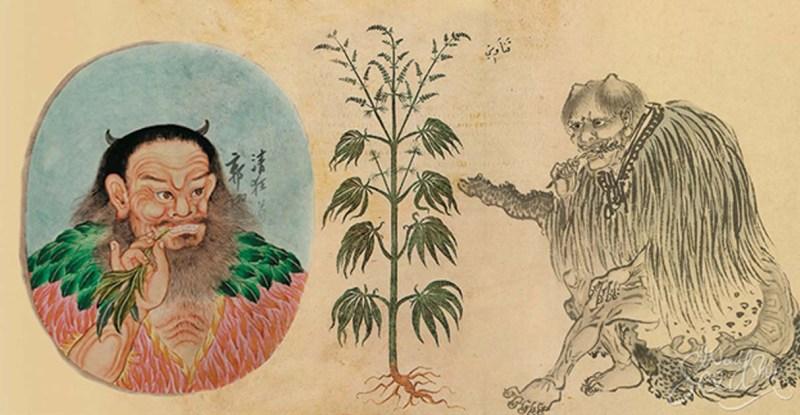 chine-cannabis