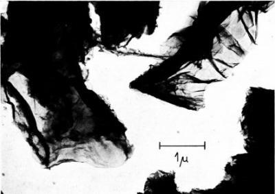 Graphene flakes TEM (Boehm 1962)