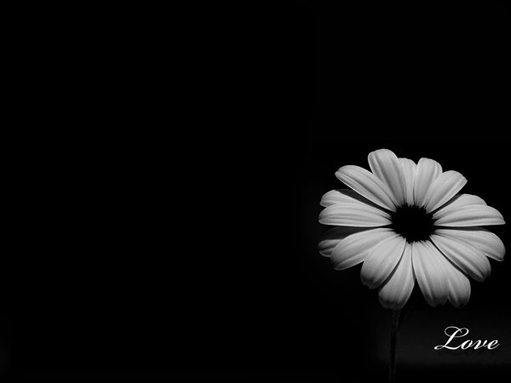 20 Gorgeous Black Wallpapers for renew your desktop wallpaper as leaving