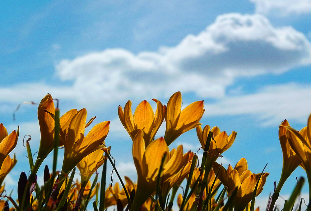 8-free-flower-photos