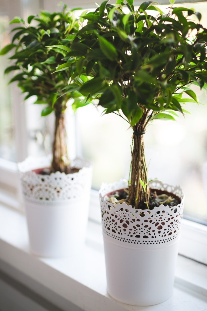 green plants with sweet potted for green home decorating ideas