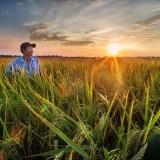 Hoi An rice farmers