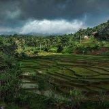 Java ricefield