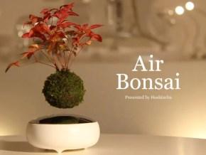 空中盆栽!?小さな盆栽が空中に浮く不思議な光景!