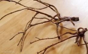 水草レイアウト弄りたい病が発症。枝流木でレイアウトしてみる。