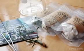 URBAN GREEN MAKERS+ビーカーで植物をオシャレにディスプレイ!