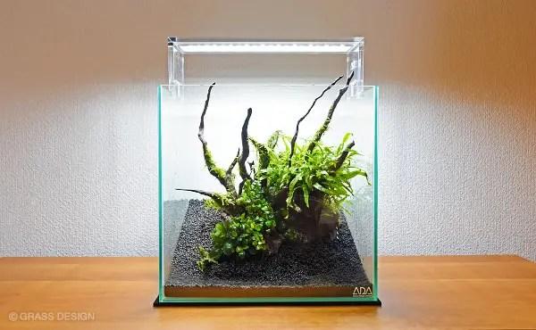 水草30cm水槽レイアウト
