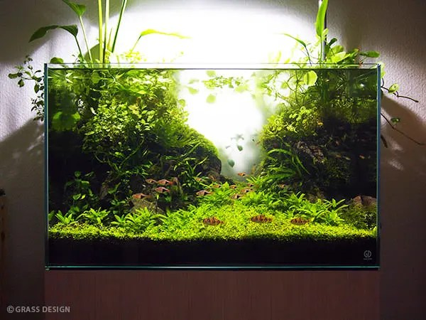 60cm水槽水草レイアウト