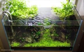 僕が水草水槽や熱帯魚を撮影する際に工夫している10個のポイント☆
