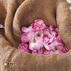 bag_roses