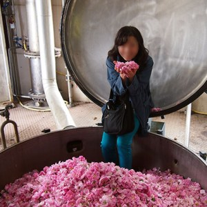 Rose extraction