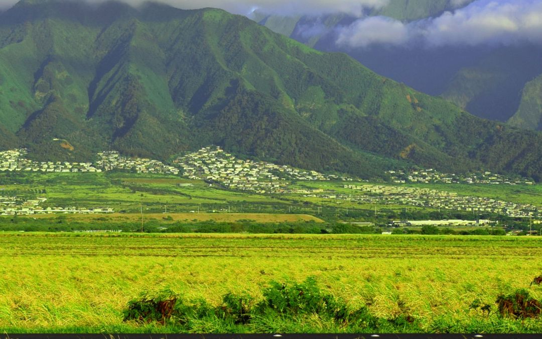 Easier to build mansions on Maui than apartments