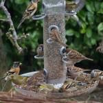 vogelvoederaar