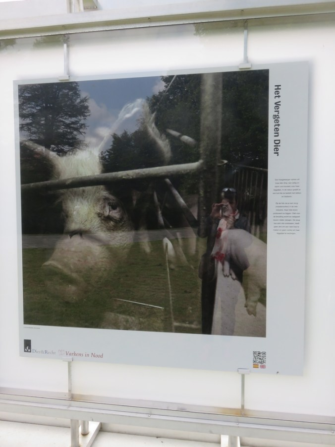 Photo from Jo-Anne McArthur, Exhibit 'Het Vergeten Dier, Brugge