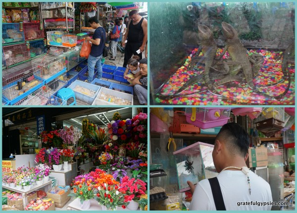 Scenes from the Bird and Flower Market.