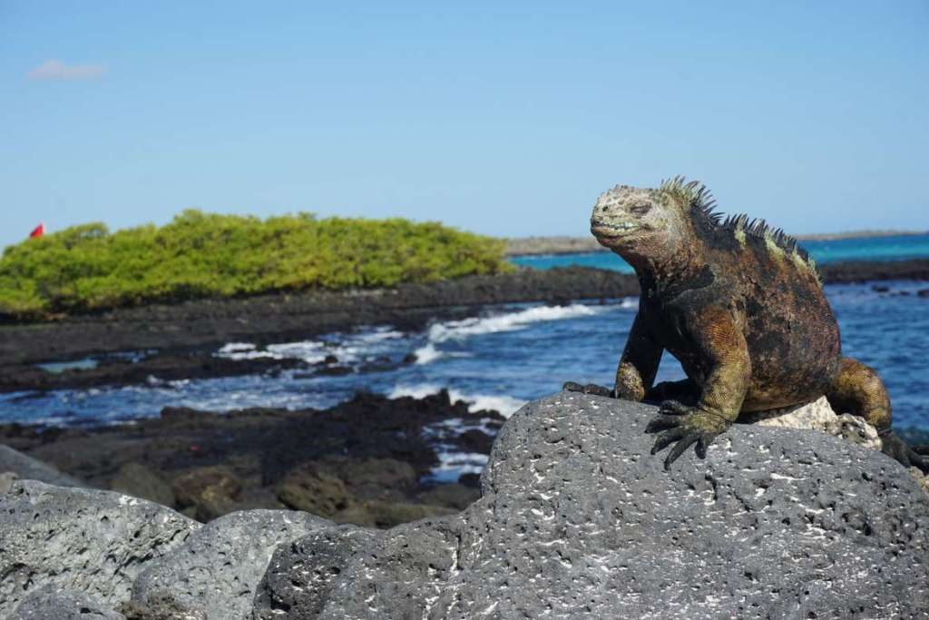 galapagos islands on a budget
