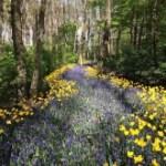 pathflowersUnsplash