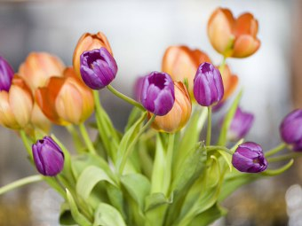 https://i2.wp.com/www.gratis360.it/immagini/Immagini_di_fiori_tulipani.jpg