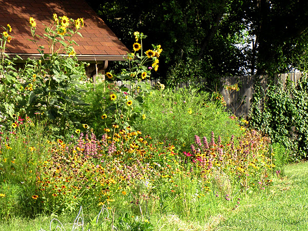 The wildflower garden is a riot of color but is terribly overgrown.