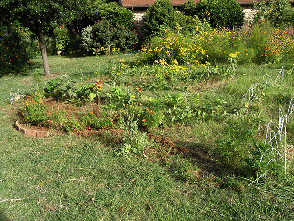 After partial cleanup, row one has a lot less grass, a band of marigolds, and the start of a terrace wall.