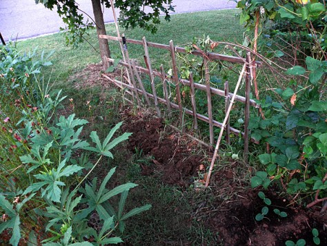 In-ground clay planter dug next to trellis three.