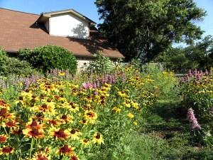 June 2014: With the creation of the wildflower garden, the front yard has become an inviting place.