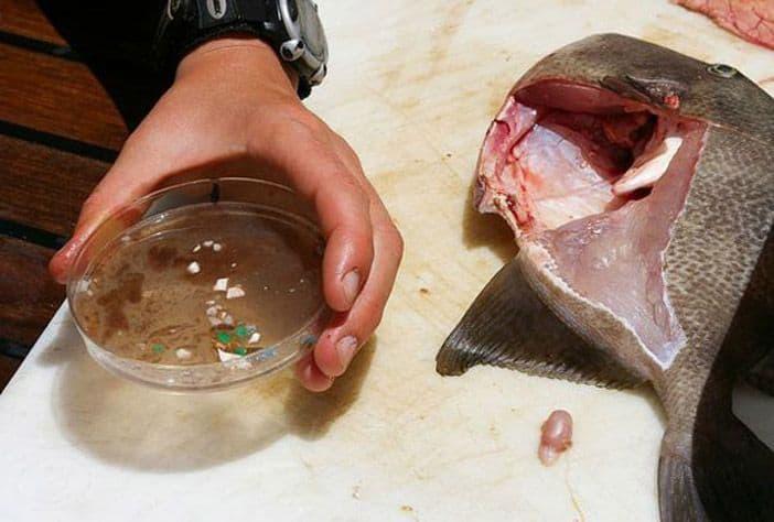 http---coresites-cdn.factorymedia.com-mpora_new-wp-content-uploads-2016-04-Plastic-Fish-Stomach-Ocean-Pollution