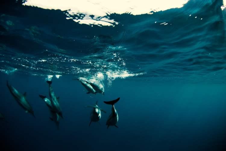 dia mundial de los oceanos mar medio ambiente  delfines