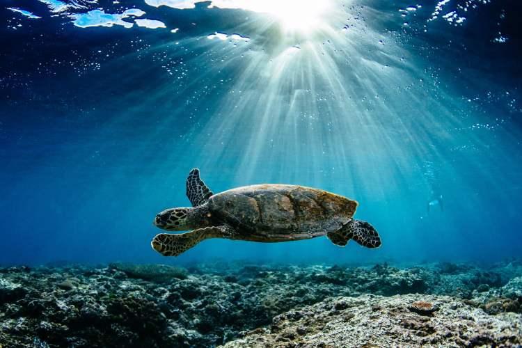 dia mundial de los oceanos mar medio ambiente tortuga