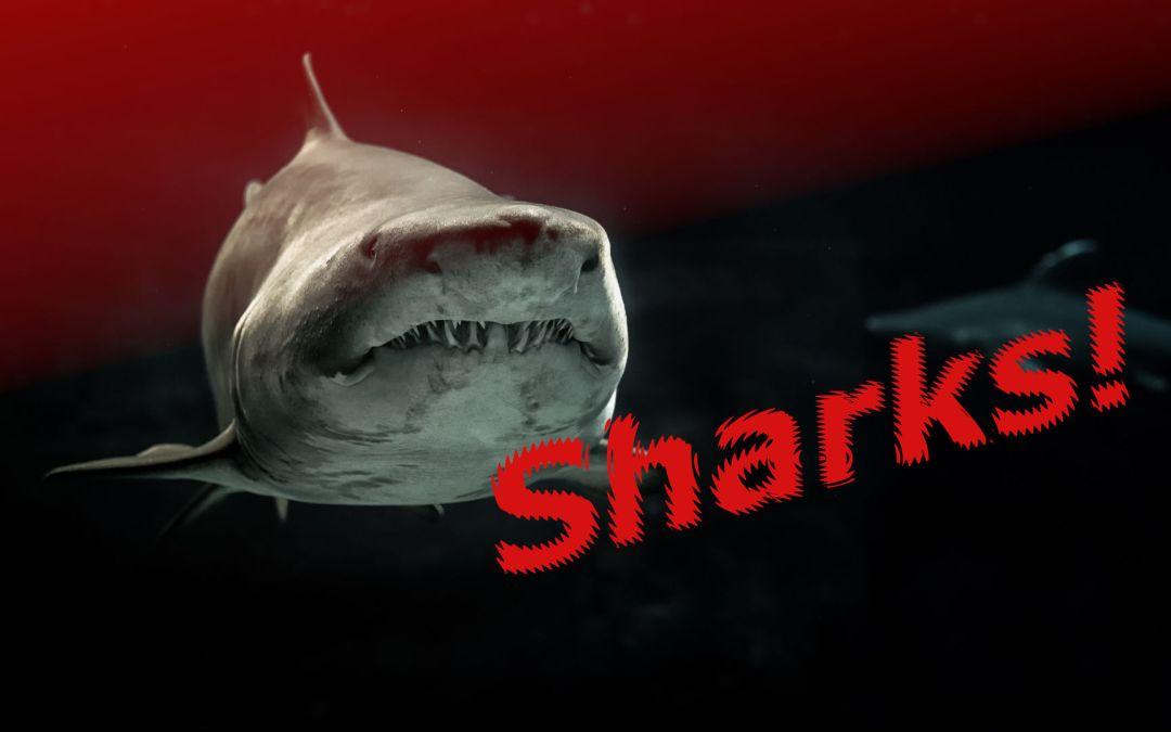 Killer Shark Horror Movies – The Complete List