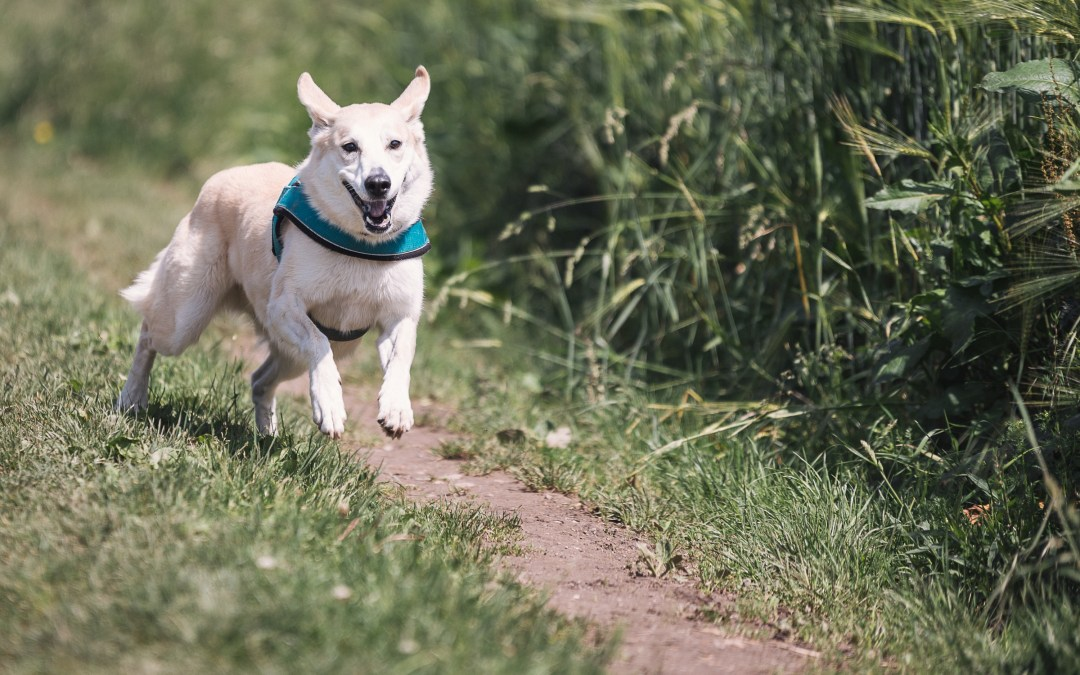 5 Best Place for Dog Walking Trails Near Me