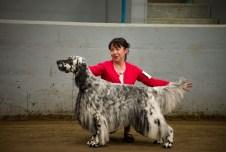 AKC Dog Show Grays Harbor Fairgrounds-10