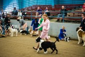 AKC Dog Show Grays Harbor Fairgrounds-3