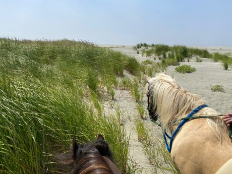 Horseback riding grays Harbor 17