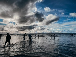 Washington coast clam digging (6)