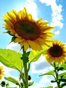 Sun-kissed Flower