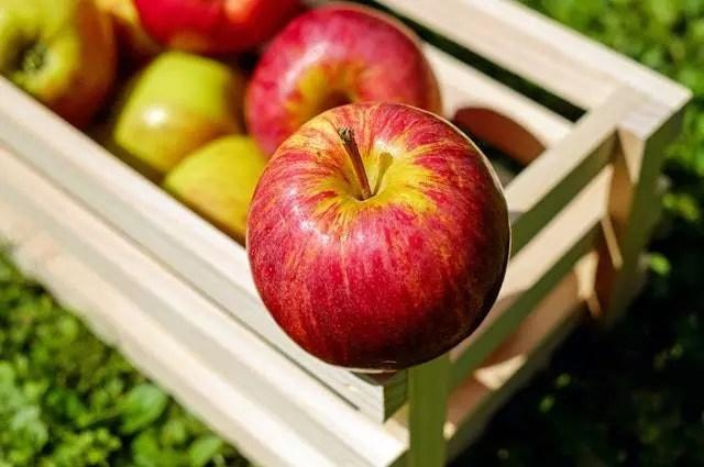 apple-red-fruit-fruits
