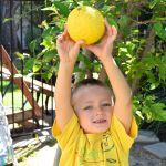 Lemon Chicken 7