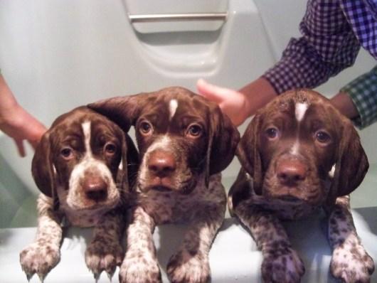 Josie, Japer & Jackson