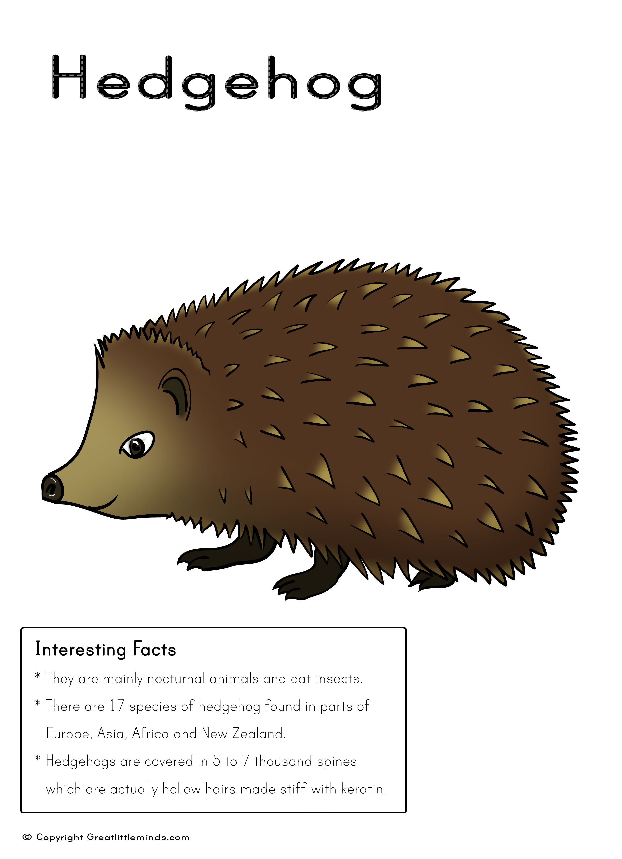 Hedgehog Picture With Fact Box