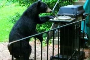 black-bear-at-grill