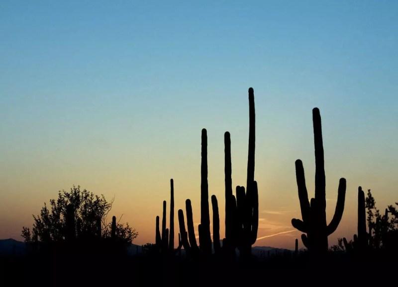 Arizona – Tucson