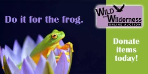 Frog_Theme_Auction