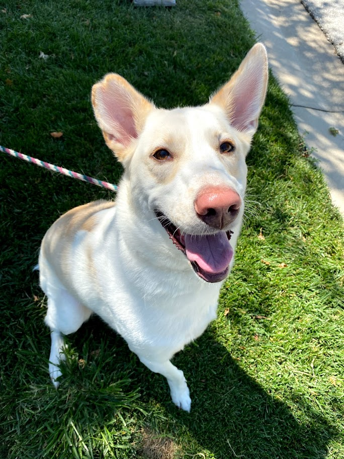 Featured Foster - Grace