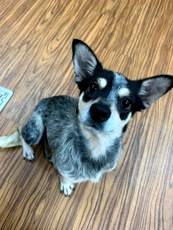 Featured Pet - Emily