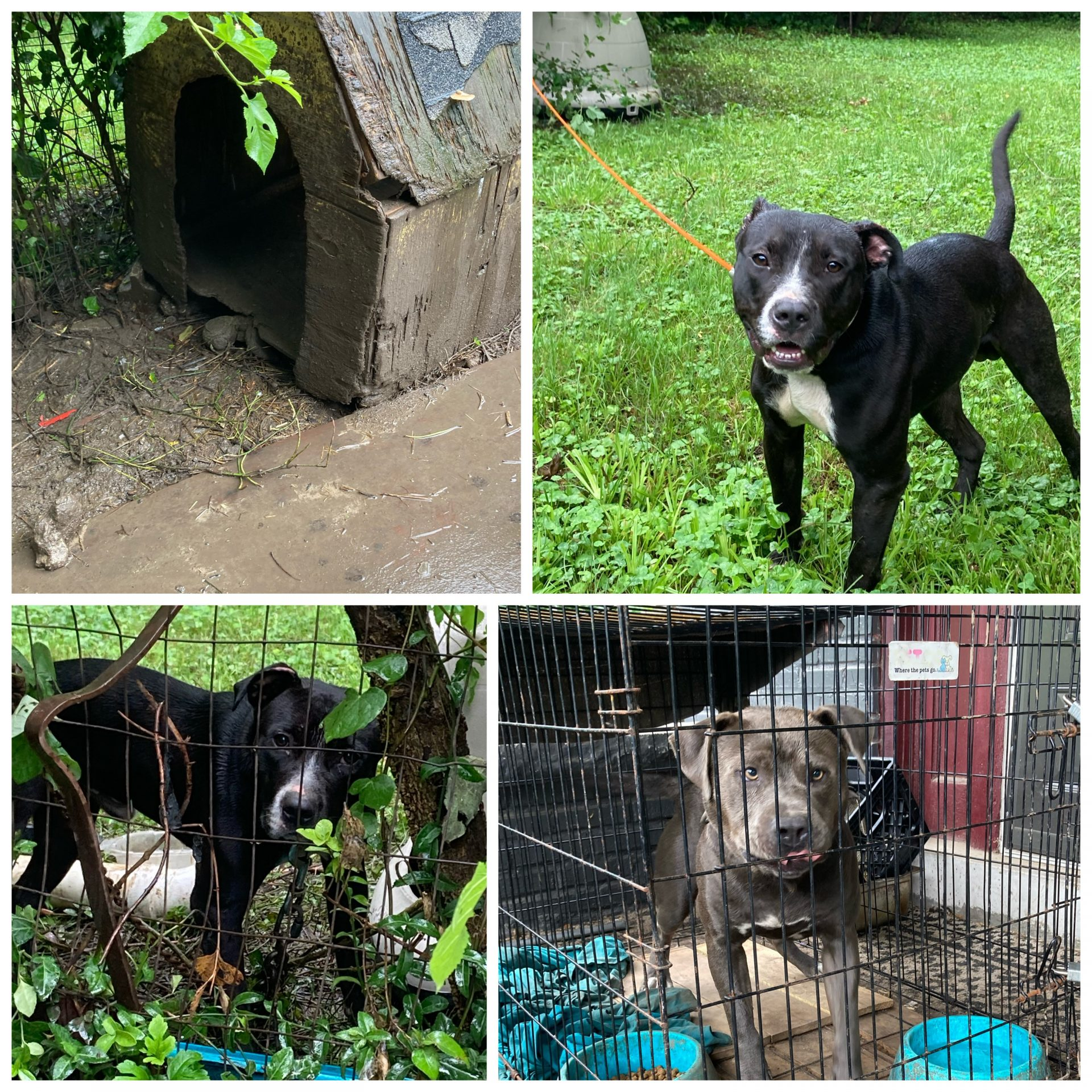Outreach dogs like this need your help!