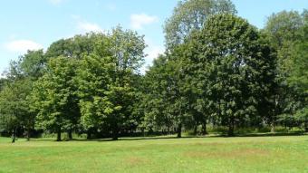 Lush mature trees